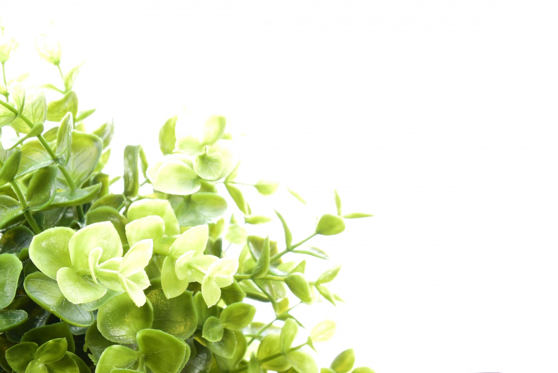 観葉植物を置きたいけれどフェイクと本物のどちらかで悩んだら