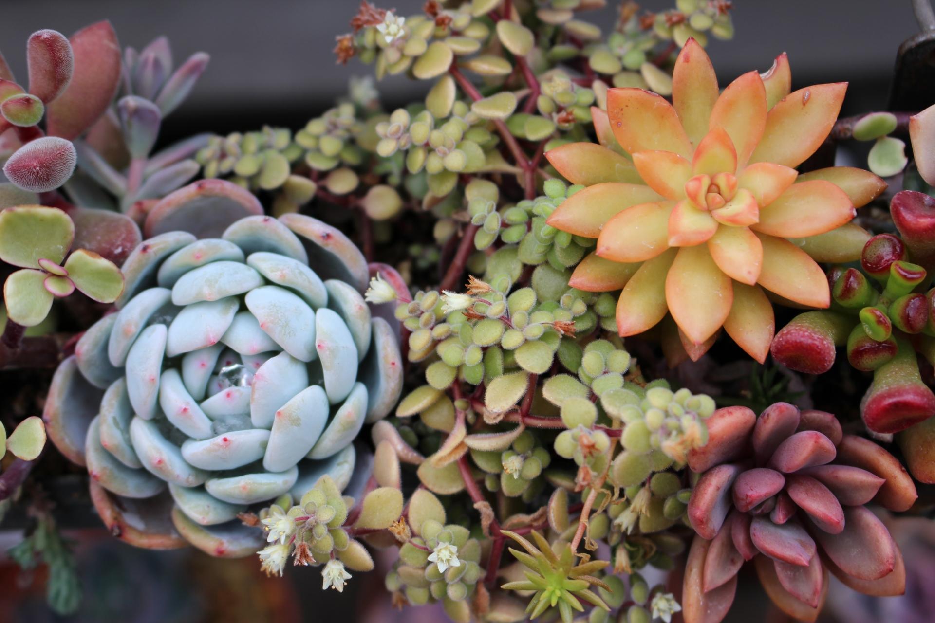多肉植物の苗や鉢は100均で手に入れよう。おしゃれな飾り方