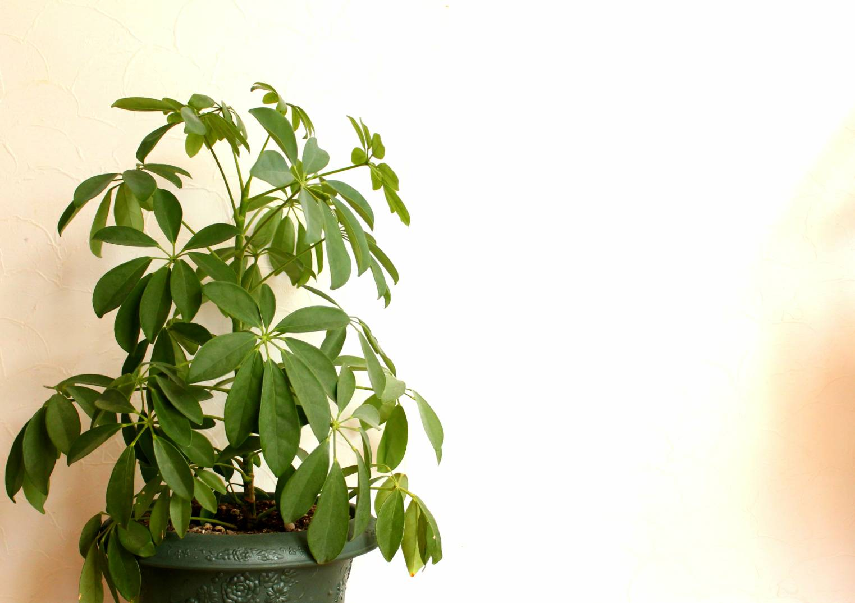 観葉植物の水やりに基本の道具と留守中でも困らないアイテム