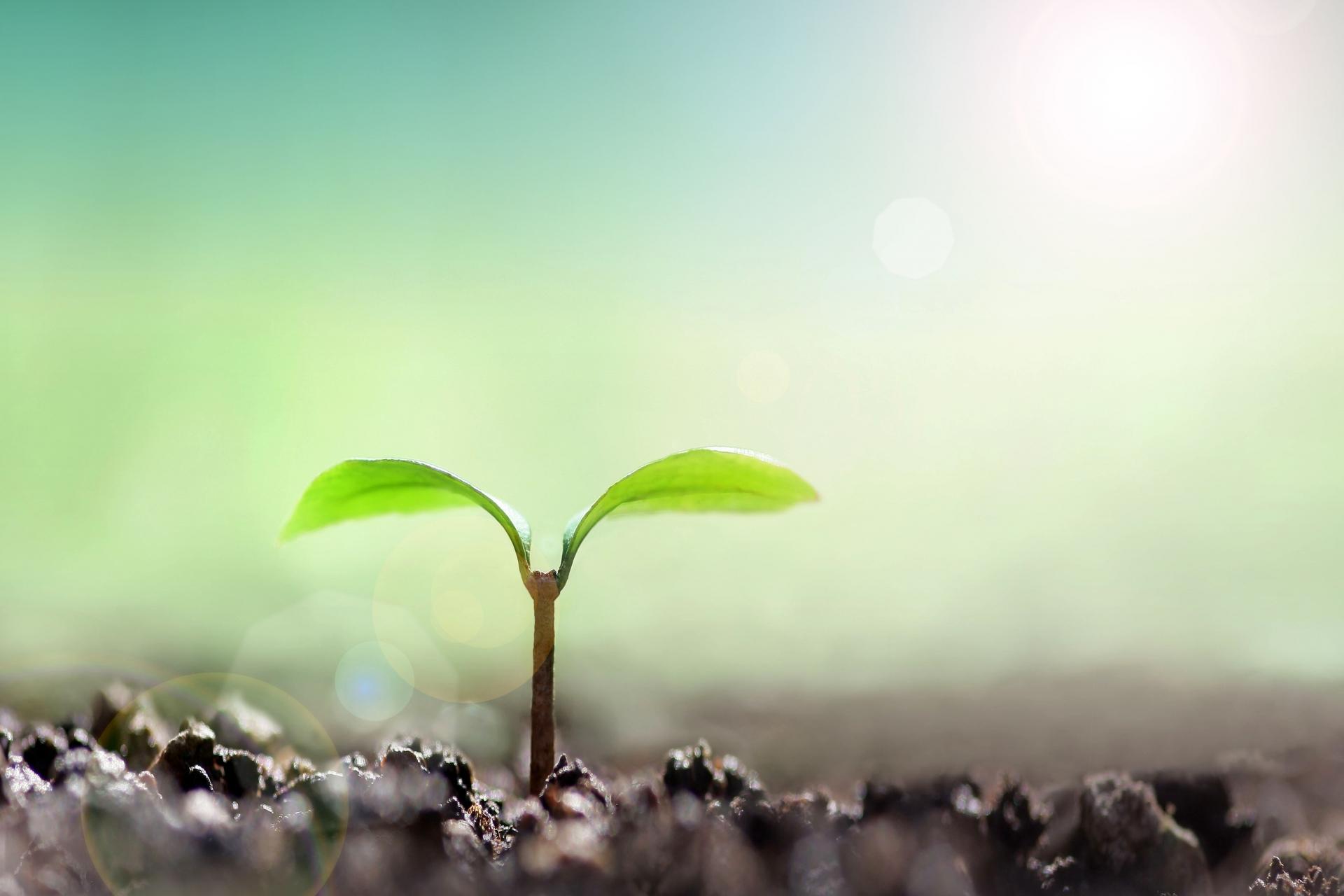 観葉植物を室内で育てる時は『土』で育てることをおすすめします