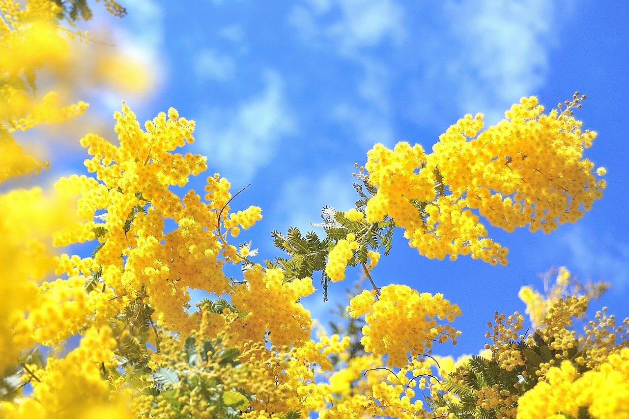 花言葉で友情・感謝の花を調べて大切な友人に贈るおすすめの花