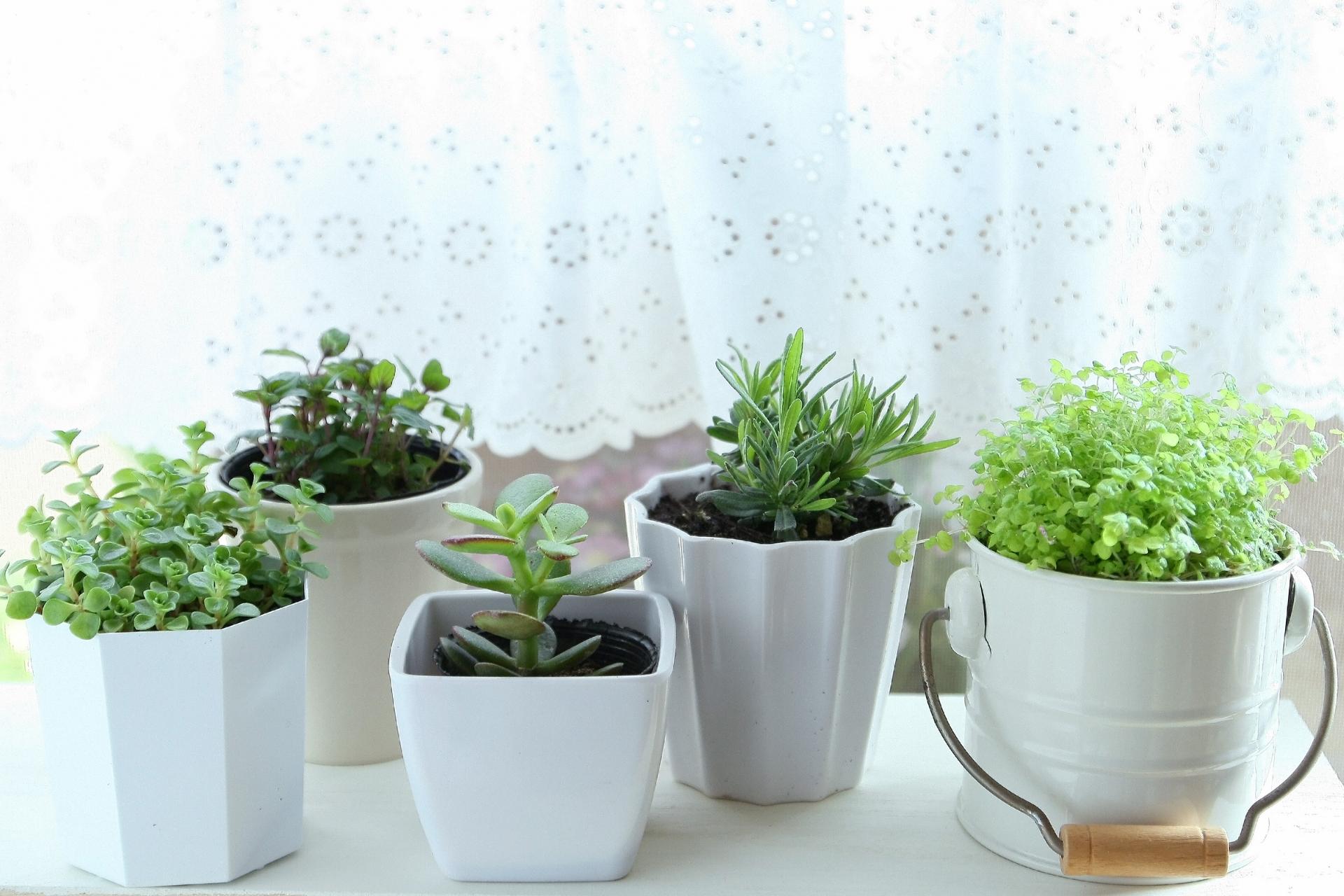 多肉植物の育て方に問題あり?伸びた観葉植物の救済方法を紹介