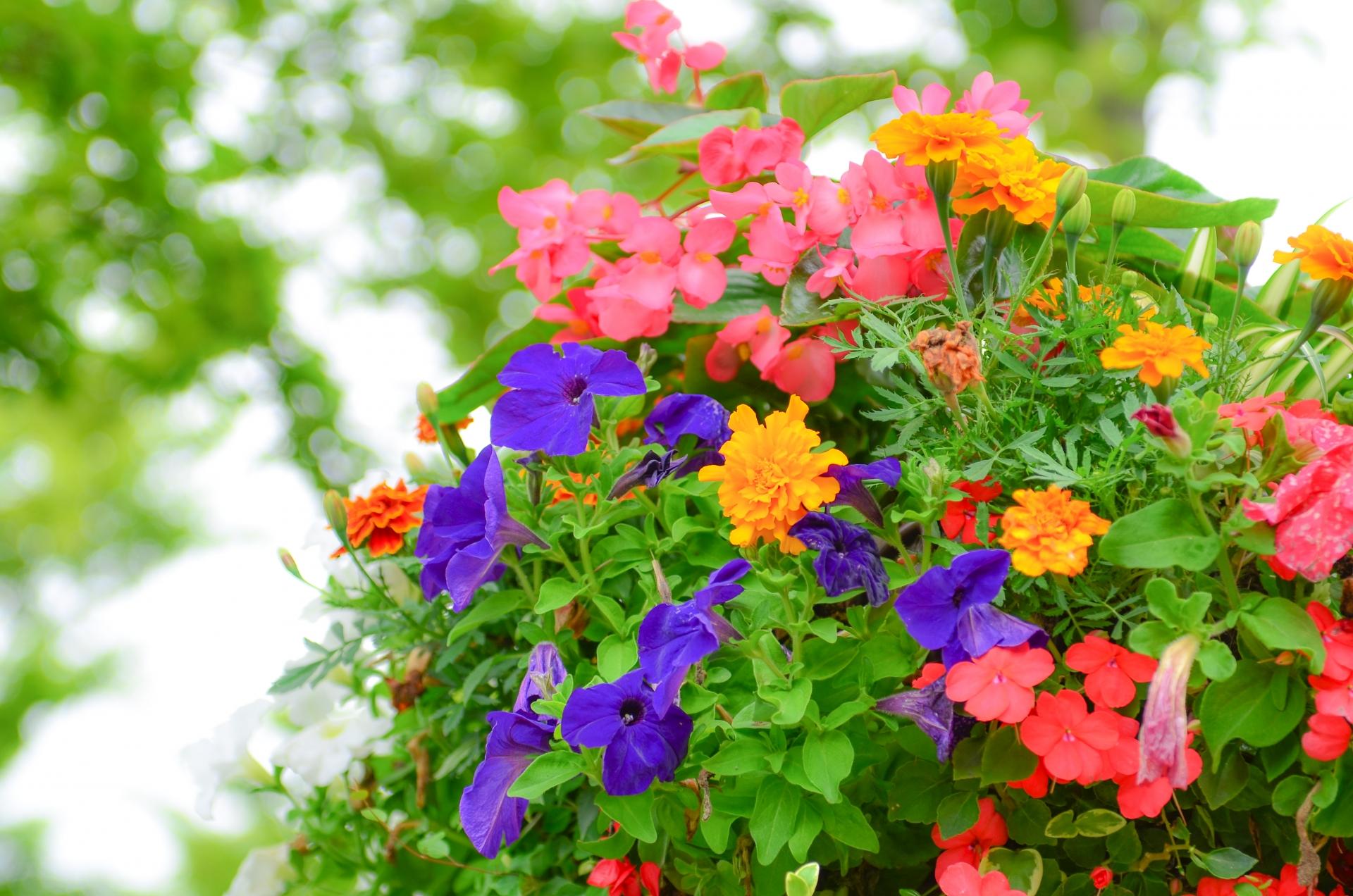 多肉植物の寄せ植え・鉢穴なしの容器を使う時のポイントと注意点