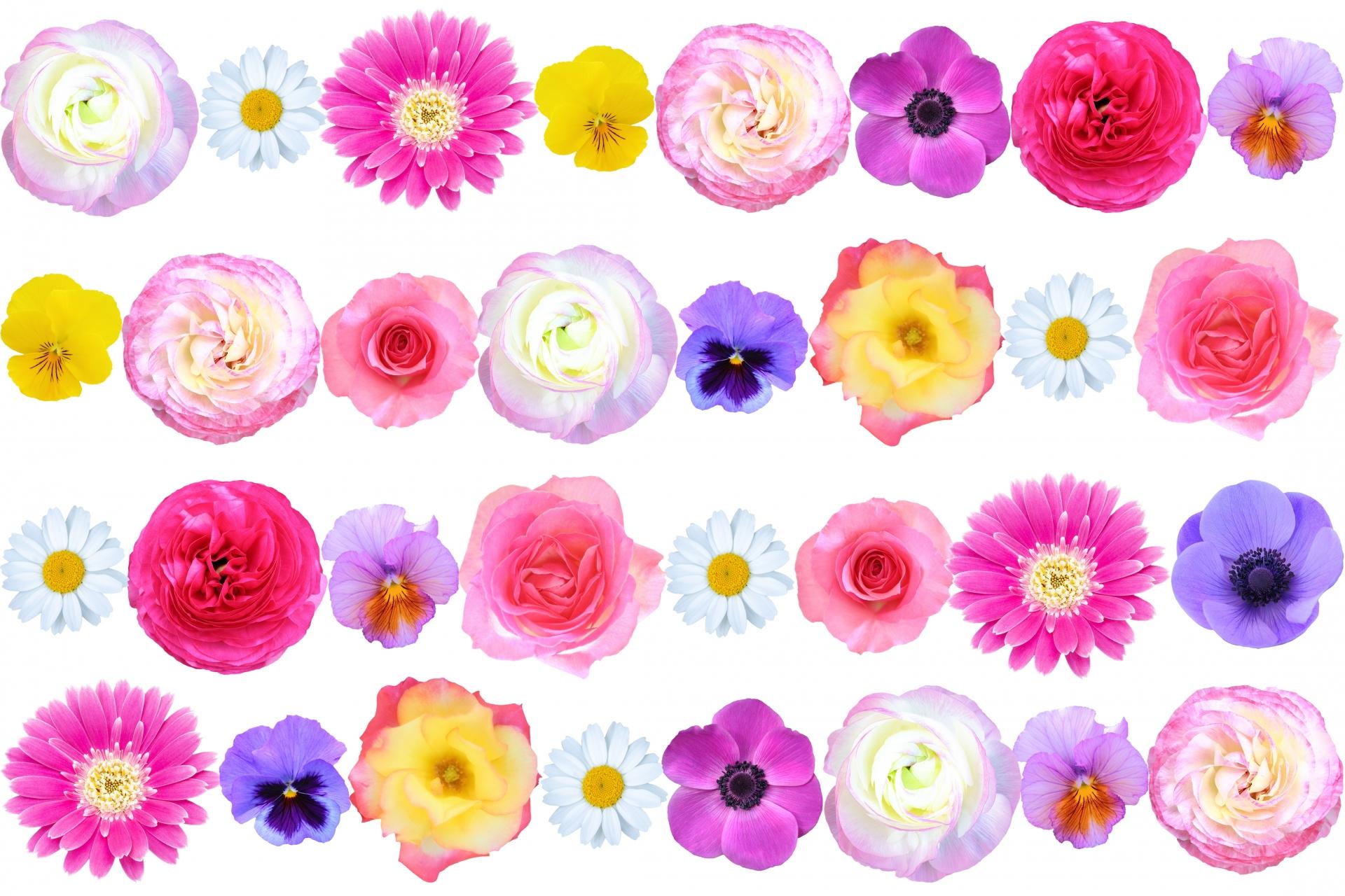 花言葉で伝えたい!別れやさよならを連想させる花の種類を紹介