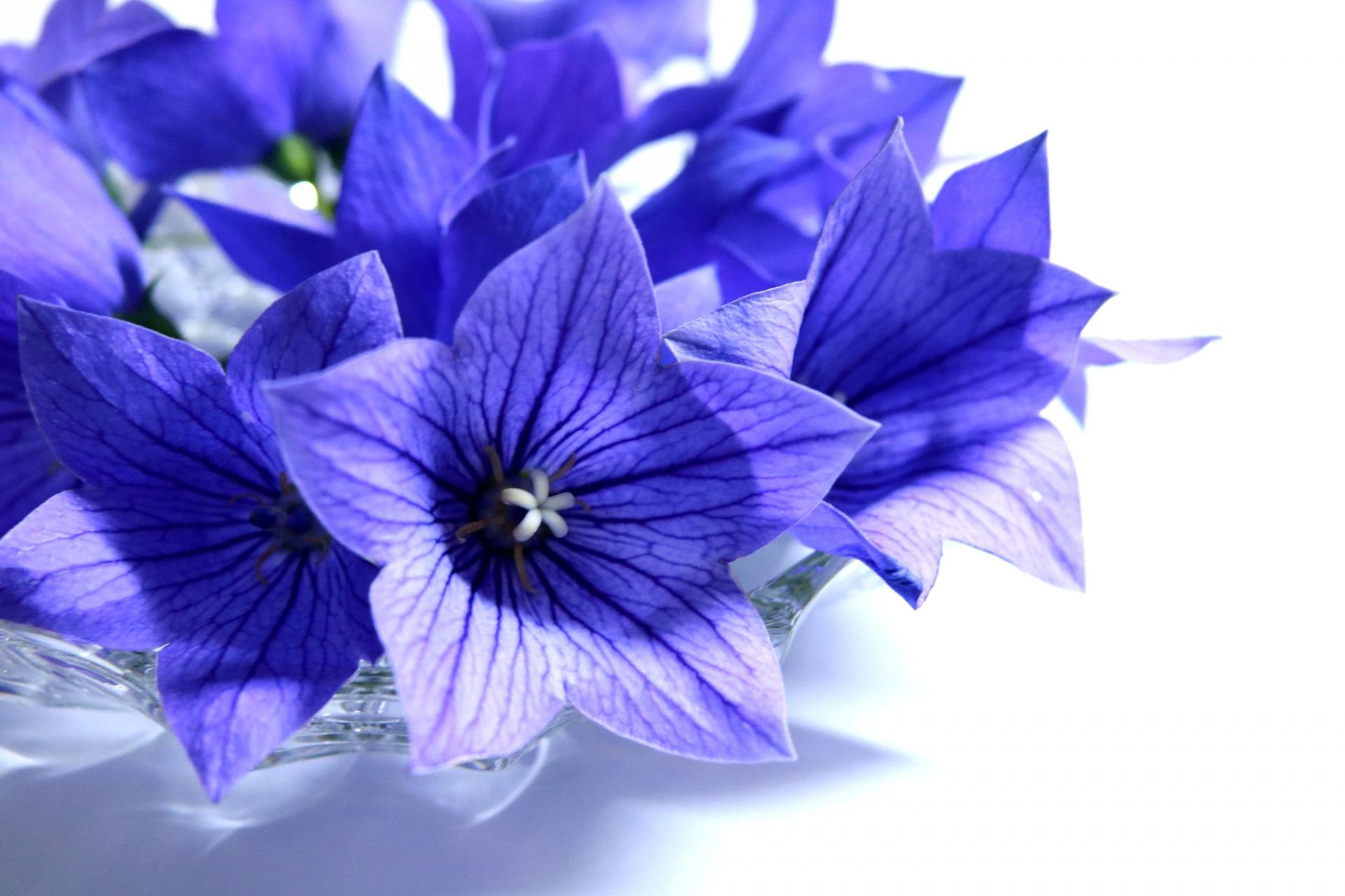 花言葉が「愛してる・永遠」という素敵な意味をもつ可憐な花