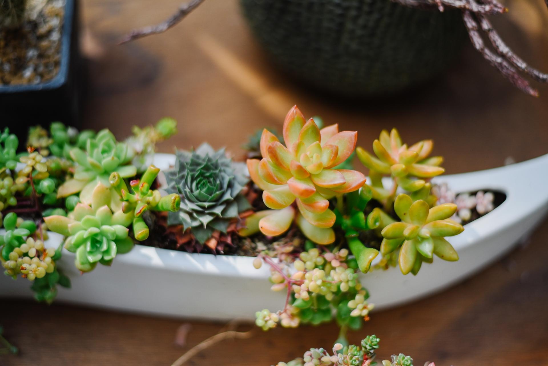 寄せ植えで冬の玄関を綺麗に彩る!冬の寄せ植えのコツと作り方