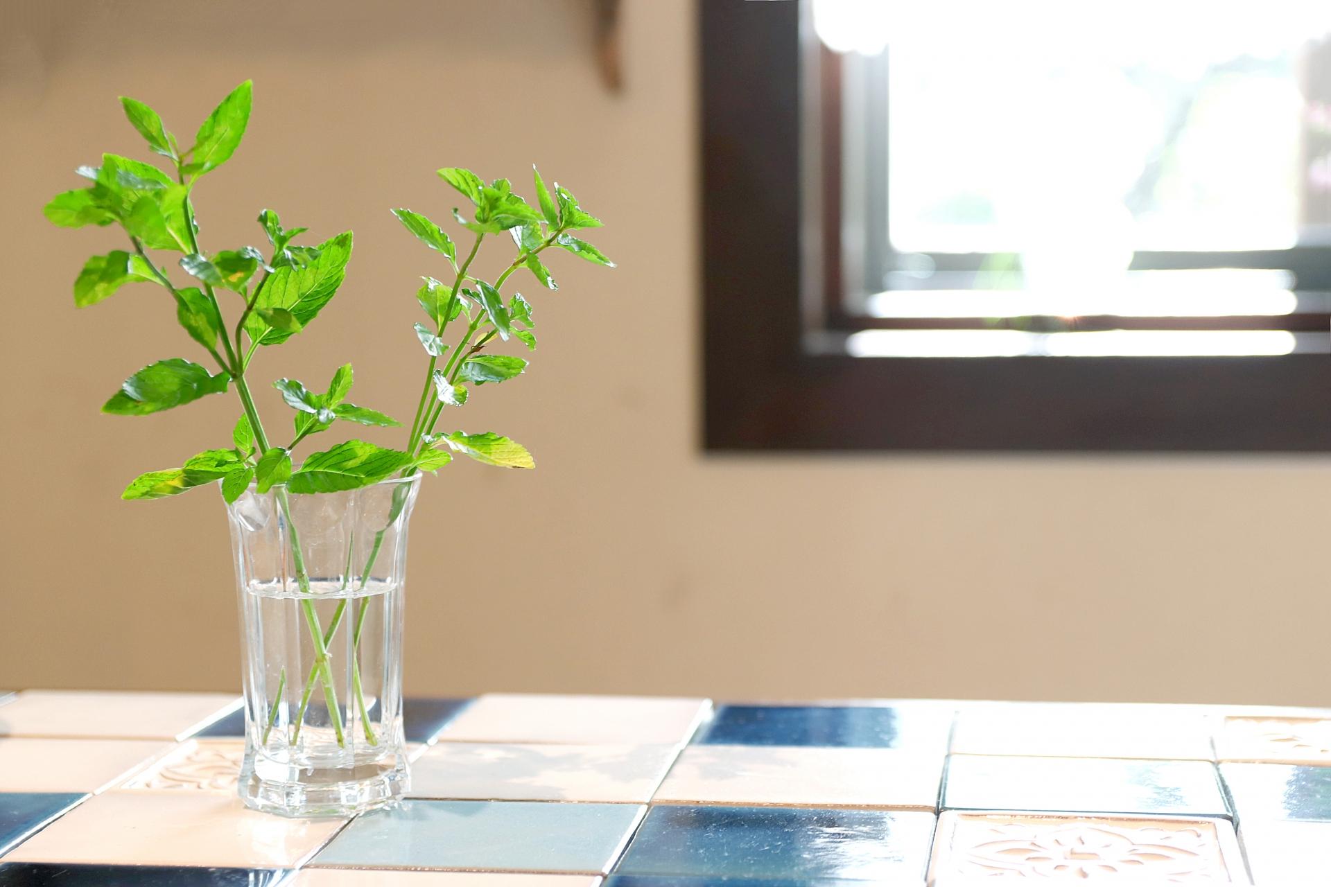 ハーブの室内栽培で虫がついた時の対処法。虫がつかない方法も