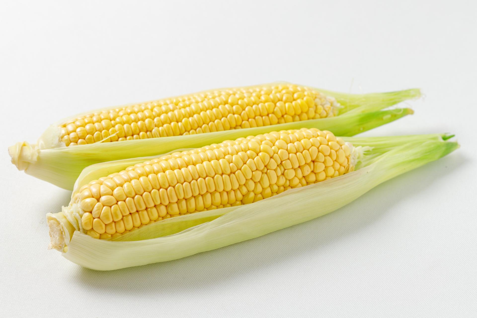 家庭菜園でトウモロコシ栽培。種まきのやり方と美味しく作るコツ
