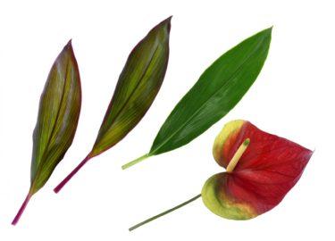 ドラセナが花をつけたらなぜ切るの?花を切る理由とお手入れ方法